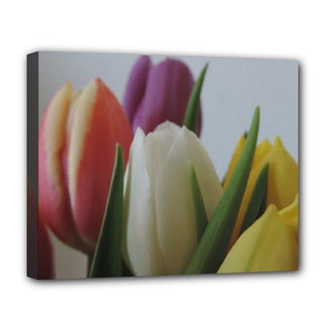 Colored By Tulips Deluxe Canvas 20  X 16   by picsaspassion