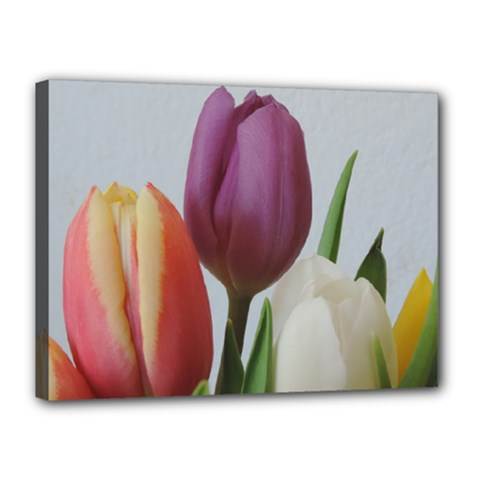 Tulip Spring Flowers Canvas 16  X 12  by picsaspassion