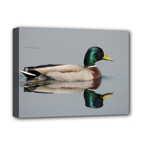 Wild Duck Swimming In Lake Deluxe Canvas 16  X 12   by picsaspassion