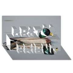 Wild Duck Swimming In Lake Best Friends 3d Greeting Card (8x4) by picsaspassion