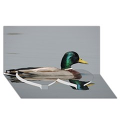 Wild Duck Swimming In Lake Twin Heart Bottom 3d Greeting Card (8x4) by picsaspassion