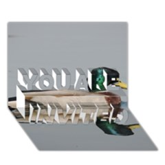Wild Duck Swimming In Lake You Are Invited 3d Greeting Card (7x5) by picsaspassion