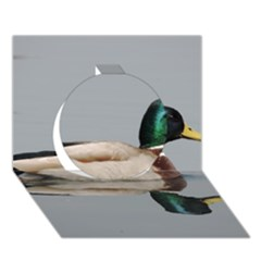 Wild Duck Swimming In Lake Circle 3d Greeting Card (7x5) by picsaspassion