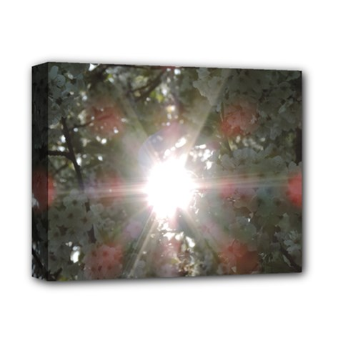 Sun Rays Through White Cherry Blossoms Deluxe Canvas 14  X 11  by picsaspassion