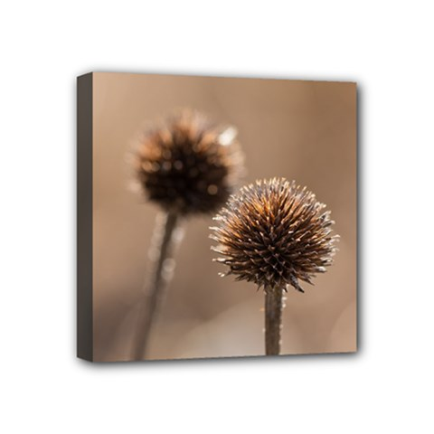 Withered Globe Thistle In Autumn Macro Mini Canvas 4  X 4  by wsfcow
