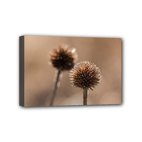 Withered Globe Thistle In Autumn Macro Mini Canvas 6  X 4  by wsfcow