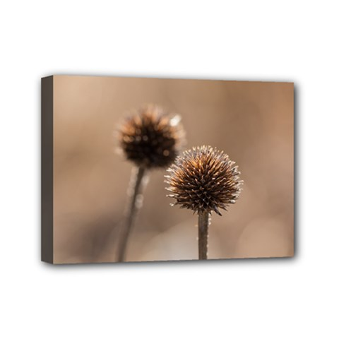 Withered Globe Thistle In Autumn Macro Mini Canvas 7  X 5  by wsfcow
