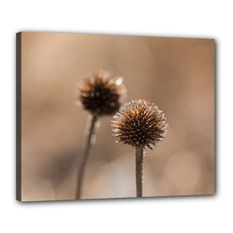 Withered Globe Thistle In Autumn Macro Canvas 20  X 16  by wsfcow