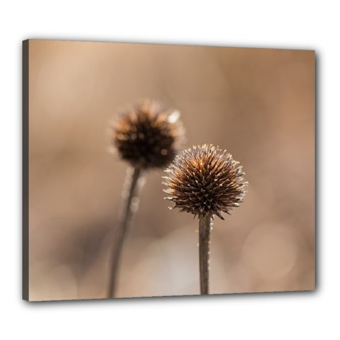 Withered Globe Thistle In Autumn Macro Canvas 24  X 20  by wsfcow