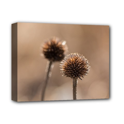 Withered Globe Thistle In Autumn Macro Deluxe Canvas 14  X 11  by wsfcow