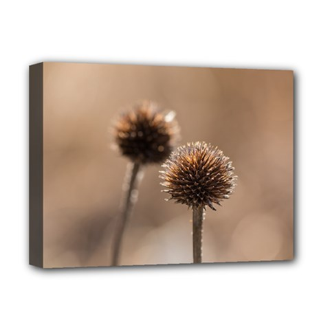 Withered Globe Thistle In Autumn Macro Deluxe Canvas 16  X 12   by wsfcow