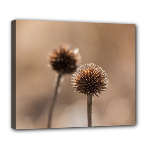 Withered Globe Thistle In Autumn Macro Deluxe Canvas 24  X 20   by wsfcow