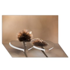 Withered Globe Thistle In Autumn Macro Twin Heart Bottom 3d Greeting Card (8x4) by wsfcow