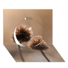 Withered Globe Thistle In Autumn Macro Circle 3d Greeting Card (7x5) by wsfcow