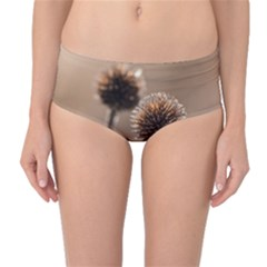 Withered Globe Thistle In Autumn Macro Mid Waist Bikini Bottoms by wsfcow
