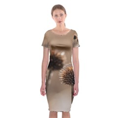 Withered Globe Thistle In Autumn Macro Classic Short Sleeve Midi Dress by wsfcow