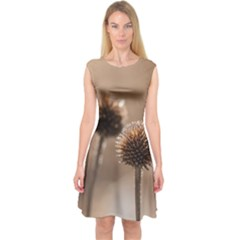 Withered Globe Thistle In Autumn Macro Capsleeve Midi Dress by wsfcow
