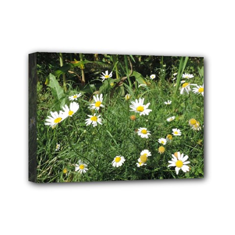 White Daisy Flowers Mini Canvas 7  X 5