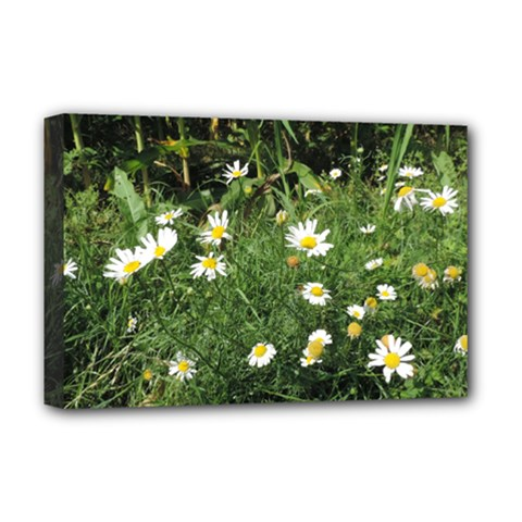 White Daisy Flowers Deluxe Canvas 18  X 12   by picsaspassion