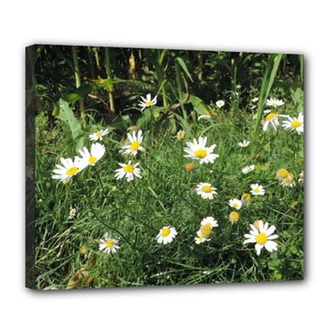 White Daisy Flowers Deluxe Canvas 24  X 20   by picsaspassion