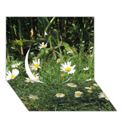 White Daisy Flowers Circle 3d Greeting Card (7x5) by picsaspassion