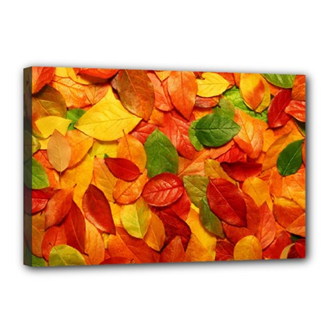 Colorful Fall Leaves Canvas 18  X 12  by AnjaniArt