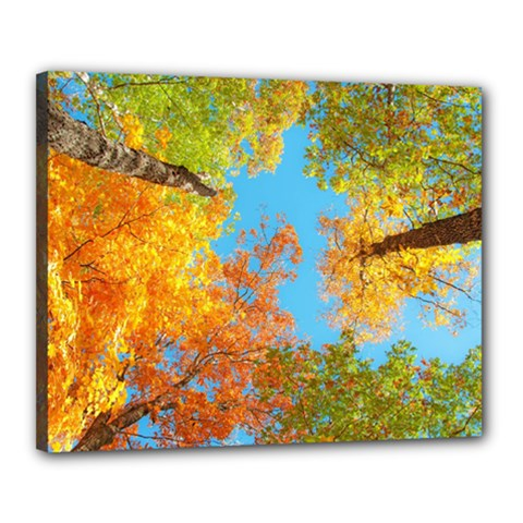 Colorful Leaves Sky Canvas 20  X 16