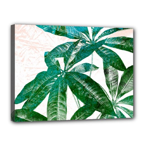Pachira Leaves  Canvas 16  X 12  by DanaeStudio
