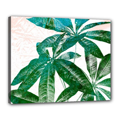 Pachira Leaves  Canvas 20  X 16  by DanaeStudio