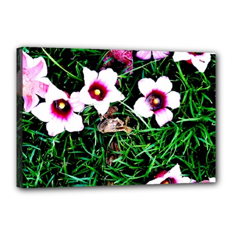 Pink Flowers Over A Green Grass Canvas 18  X 12  by DanaeStudio