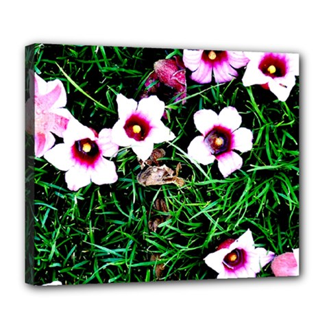 Pink Flowers Over A Green Grass Deluxe Canvas 24  X 20   by DanaeStudio