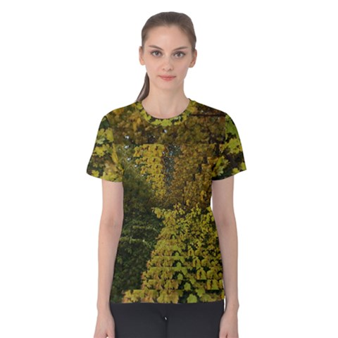 Vermont Autumn Trees Women s Cotton Tee by SusanFranzblau