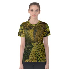 Vermont Autumn Trees Women s Cotton Tee