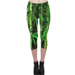 Bamboo Pattern Tree Capri Leggings