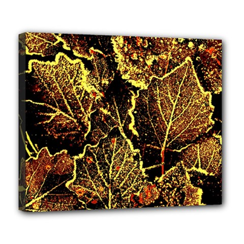 Leaves In Morning Dew,yellow Brown,red, Deluxe Canvas 24  X 20