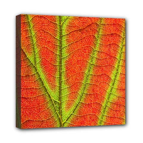 Unique Leaf Mini Canvas 8  X 8