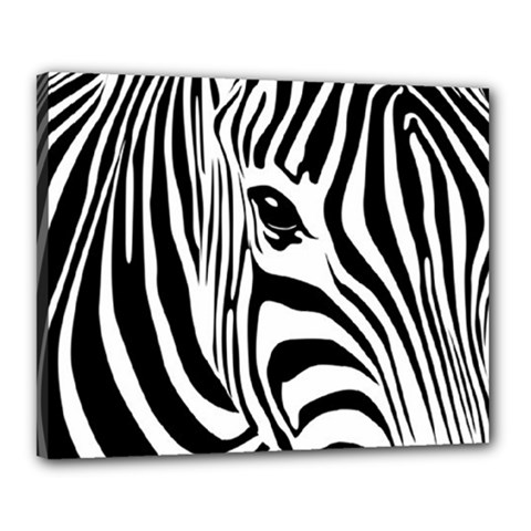 Animal Cute Pattern Art Zebra Canvas 20  X 16