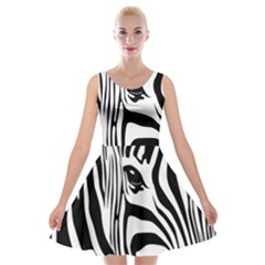 Animal Cute Pattern Art Zebra Velvet Skater Dress
