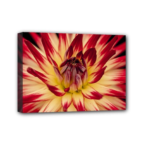 Bloom Blossom Close Up Flora Mini Canvas 7  X 5  by Amaryn4rt