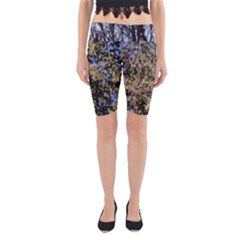 Green Trees against a Blue Sky Cropped Yoga Leggings
