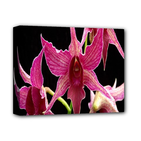 Orchid Flower Branch Pink Exotic Black Deluxe Canvas 14  X 11  by Jojostore