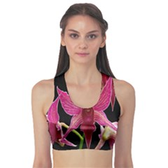 Orchid Flower Branch Pink Exotic Black Sports Bra