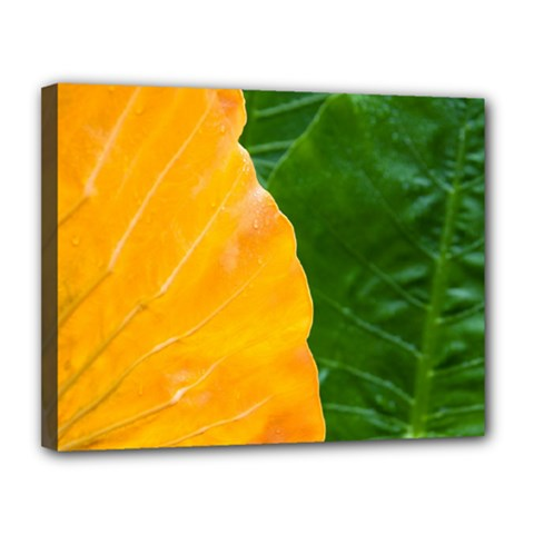 Wet Yellow And Green Leaves Abstract Pattern Canvas 14  X 11