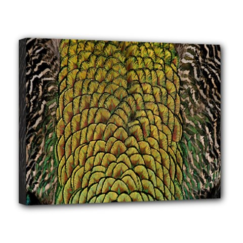 Peacock Bird Feather Color Canvas 14  X 11  by AnjaniArt