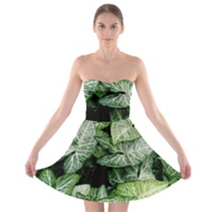 Green Leaves Nature Pattern Plant Strapless Bra Top Dress by Amaryn4rt