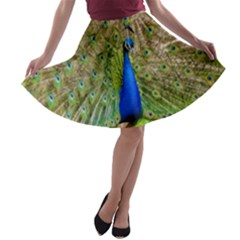 Peacock Animal Photography Beautiful A Line Skater Skirt