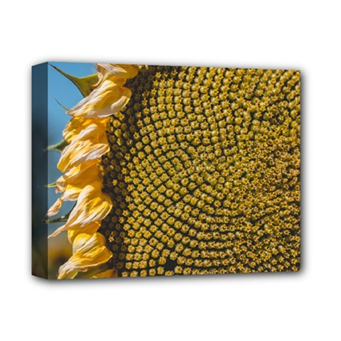 Sunflower Bright Close Up Color Disk Florets Deluxe Canvas 14  X 11  by Amaryn4rt