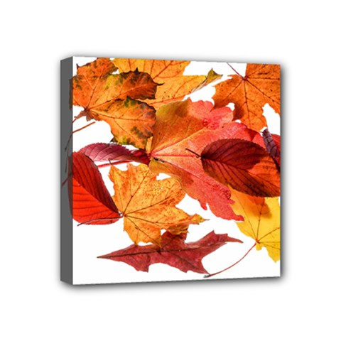 Autumn Leaves Leaf Transparent Mini Canvas 4  X 4