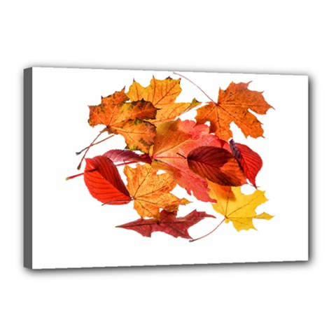 Autumn Leaves Leaf Transparent Canvas 18  X 12  by Amaryn4rt