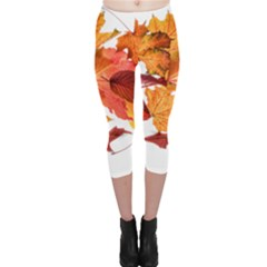 Autumn Leaves Leaf Transparent Capri Leggings